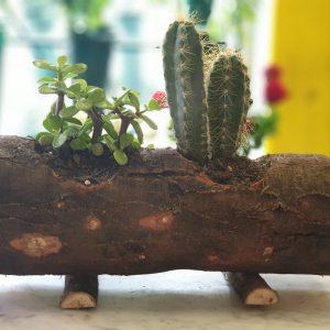 Ceppo legno con piante3