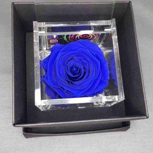 Rosa stabilizzata profumata blu