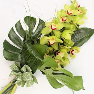 Orchidea-Cymbidium