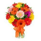 piante-&-fiori